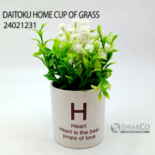 DAITOKU HOME CUP OF GRASS 24021231