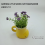 DAITOKU LITTLE SHOES CUP FOAMFLOWER (2) 24021211