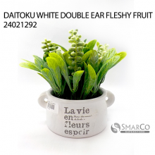 DAITOKU WHITE DOUBLE EAR FLESHY FRUIT 24021292