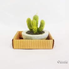 WHOLESALE CACTUS PARAFFIN WAX DECOR GREEN 10006922  8992017309684